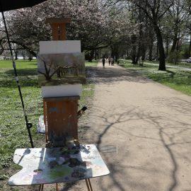 Plein Air: Kirschblüte in den Alsterwiesen